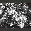Fototapeta - Bleak forest A0-LFTNT0753