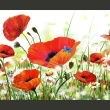 Fototapeta - Country poppies A0-F45TNT0027-P