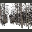 Fototapeta - drzewa - jesień A0-LFTNT0755