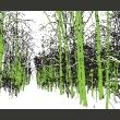 Fototapeta - drzewa - wiosna A0-LFTNT0754