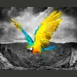 Fototapeta - Exotic parrot A0-LFTNT0759