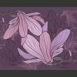 Fototapeta - Fioletowe magnolie A0-LFTNT0553