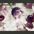 Fototapeta - Heavenly tulips A0-LFTNT0531