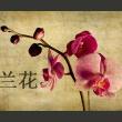 Fototapeta - Japanese orchid A0-LFTNT0544