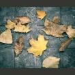 Fototapeta - jesień - melancholia A0-LFTNT0772