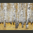 Fototapeta - Jesienny brzozowy las A0-F4TNT0006-P