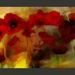 Fototapeta - Maki w ciepłej tonacji A0-F4TNT0054-P
