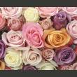 Fototapeta - Pastelowe róże A0-F4TNT0518