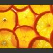 Fototapeta - Plasterki pomarańczy A0-LFTNT0875