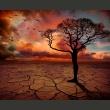 Fototapeta - Put down roots A0-LFTNT0840