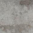 Fototapeta - Szary gołąb A0-WSR10m171-P