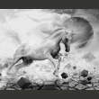 Fototapeta - Unicorn A0-LFTNT0862