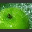 Fototapeta - Zielone jabłko A0-LFTNT0887