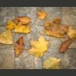 Fototapeta - Zwiastun jesieni A0-LFTNT0774