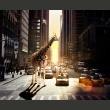 Fototapeta - Żyrafa w wielkim mieście A0-LFTNT0845