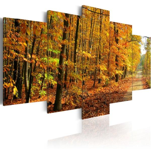Obraz - Aleja pośród kolorowych liści (100x50 cm) A0-N1584