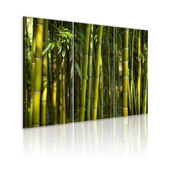 Obraz - Bambus i zieleń (60x40 cm) A0-N1586