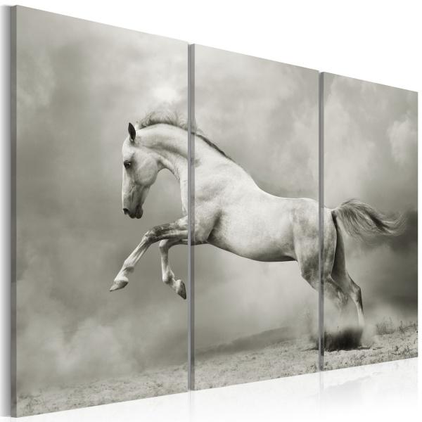 Obraz - Biały koń w ruchu (60x40 cm) A0-N1535