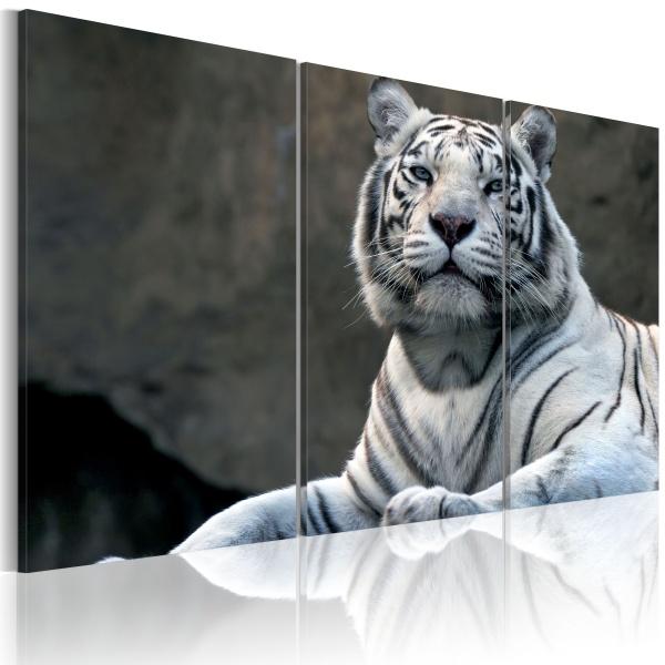 Obraz - Biały tygrys (60x40 cm) A0-N1399