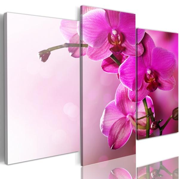 Obraz - Ciemnoróżowa orchidea (60x50 cm) A0-N1422