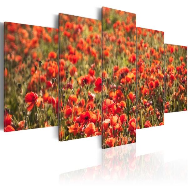 Obraz - Czerwone maki na zielonej łące (100x50 cm) A0-N1591