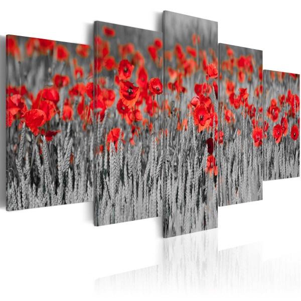 Obraz - Czerwone maki pośród zbóż (100x50 cm) A0-N1411