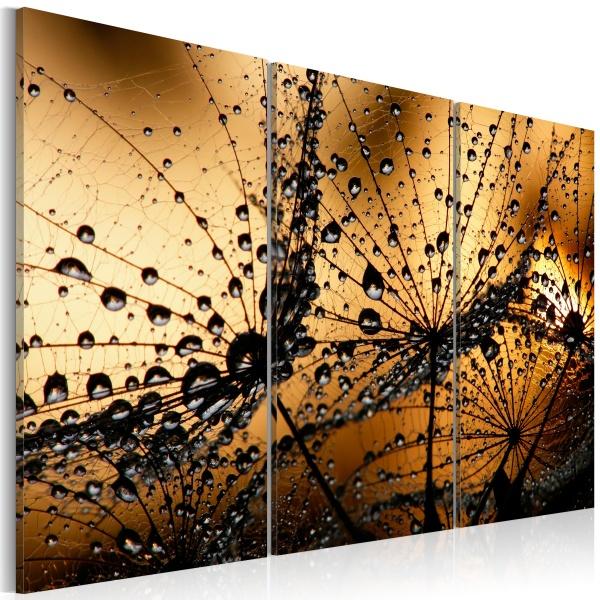 Obraz - Dmuchawce i rosa (60x40 cm) A0-N1406