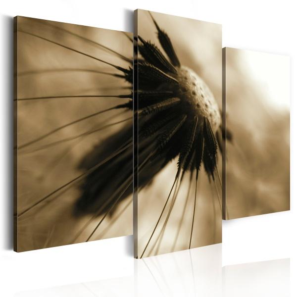 Obraz - Dmuchawiec w sepii (60x50 cm) A0-N1445