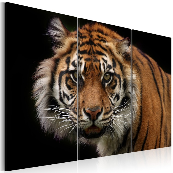 Obraz - Drapieżny tygrys (60x40 cm) A0-N1534