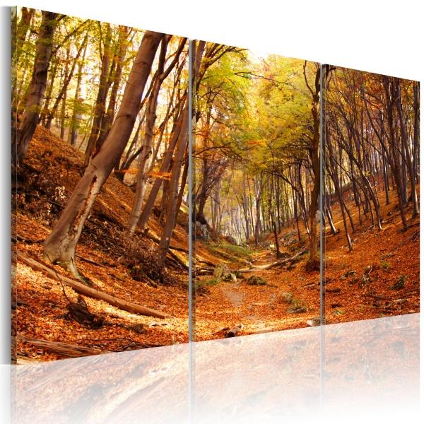 Obraz - Jesienny wąwóz (60x40 cm) A0-N1564