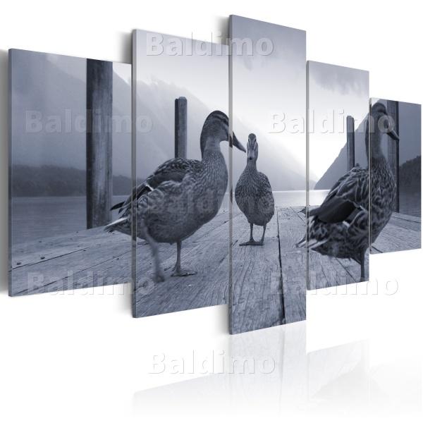 Obraz - Kaczki na molo (100x50 cm) A0-N1530
