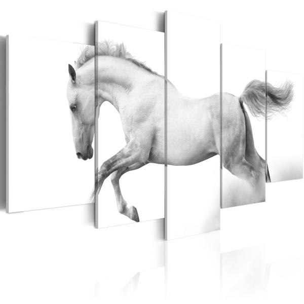 Obraz - Koń - pasja i wolność (100x50 cm) A0-N1401