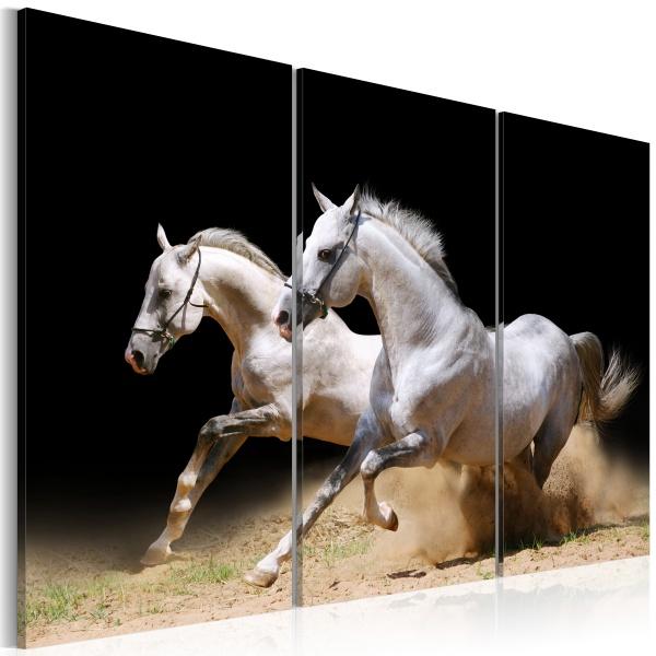 Obraz - Konie - moc i prędkość (60x40 cm) A0-N1526