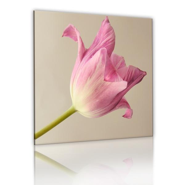 Obraz - Kwiat tulipanu (40x40 cm) A0-N1477