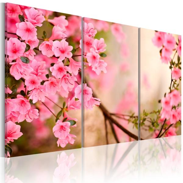 Obraz - Kwiat wiśni (60x40 cm) A0-N1487