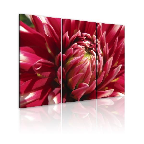 Obraz - Kwitnący ogród - dalia (60x40 cm) A0-N1588