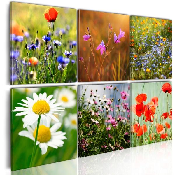 Obraz - Łąka tysiąca kolorów (60x40 cm) A0-N1607