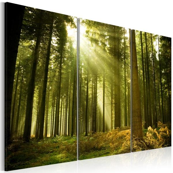 Obraz - Las - piękno natury (60x40 cm) A0-N1395