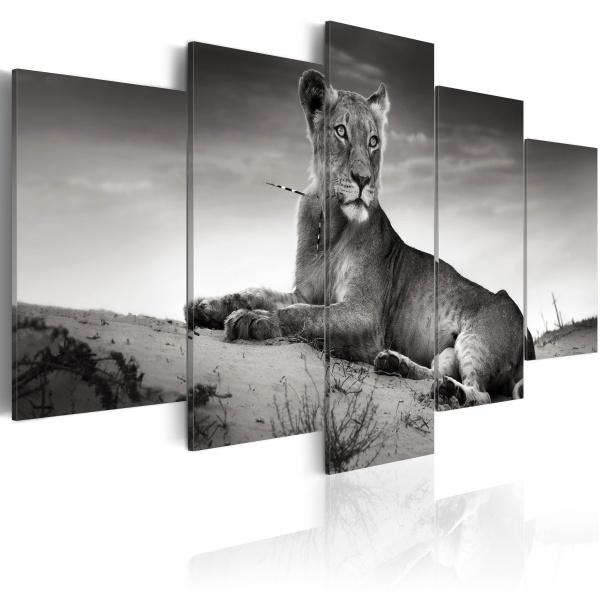 Obraz - Lwica na pustyni (100x50 cm) A0-N1523