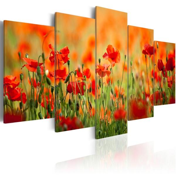 Obraz - Maki w żywych kolorach (100x50 cm) A0-N1413