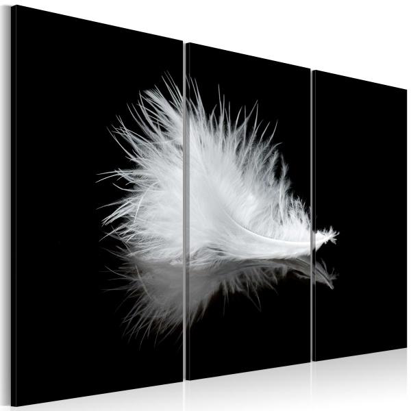 Obraz - Małe piórko (60x40 cm) A0-N1503