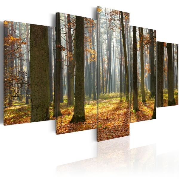 Obraz - Malowniczy krajobraz leśny (100x50 cm) A0-N1572