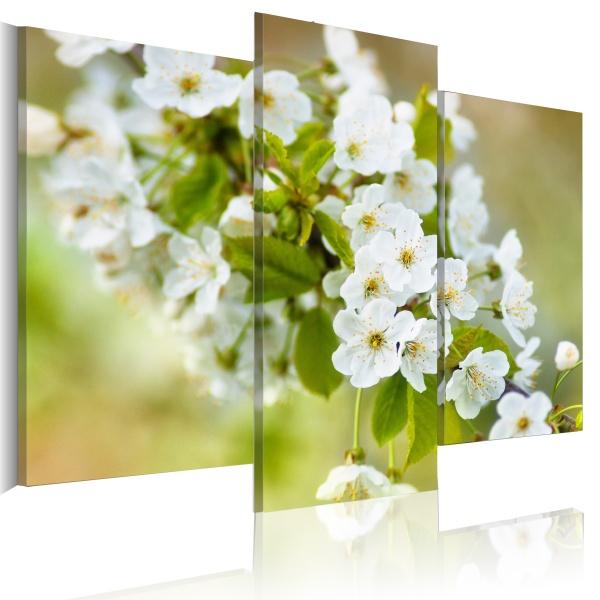 Obraz - Motyw z białymi kwiatami wiśni (60x50 cm) A0-N1479