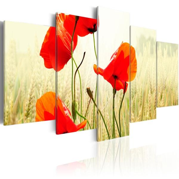 Obraz - Natura i czerwień maków (100x50 cm) A0-N1493