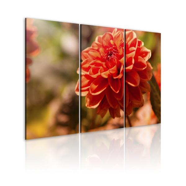 Obraz - Natura wie, co najlepsze (60x40 cm) A0-N1494