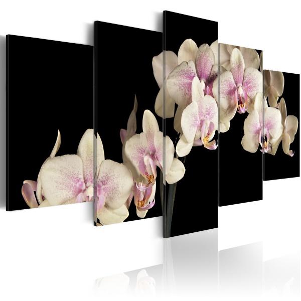 Obraz - Orchidea na kontrastującym tle (100x50 cm) A0-N1375