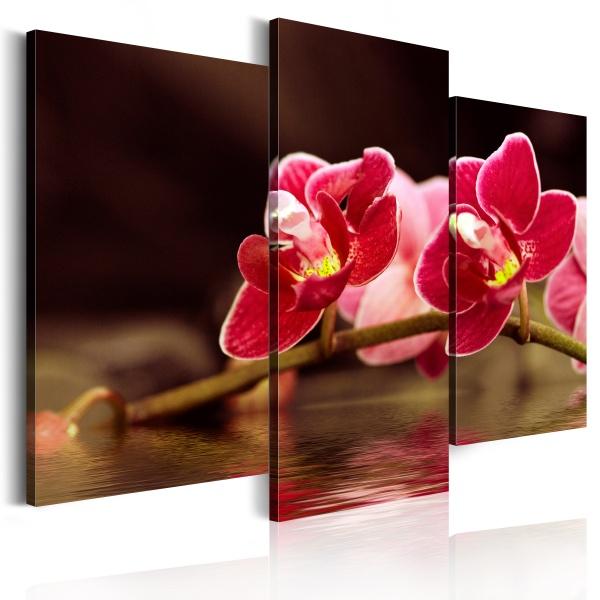 Obraz - Orchidea nad taflą jeziora (60x50 cm) A0-N1424