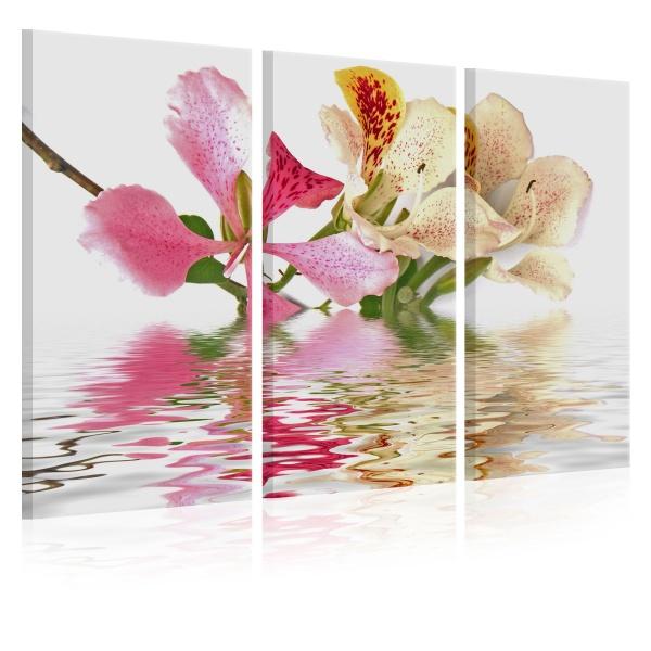 Obraz - Orchidea w cętki (60x40 cm) A0-N1374