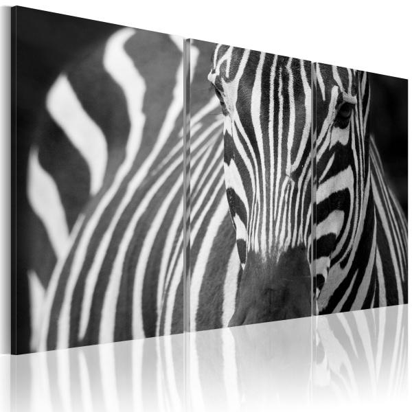 Obraz - Pani Zebra (60x40 cm) A0-N1533