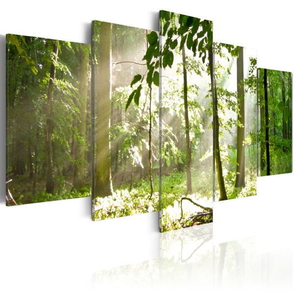 Obraz - Promień światła pośród drzew (100x50 cm) A0-N1386
